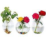 Glasseam Wall Hanging Vetro Fioriere Piante Vasi Terrario Contenitore da Interno 2Pcs Esterno per, Egg + Sferica + Mouse Forma, Regalo: 3,15 Once di Pietra Colorata