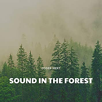 Sound In The Forest