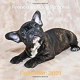 French Bulldog Puppies Calendar 2021