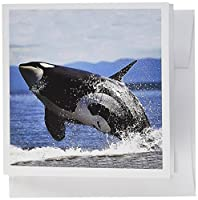 Whales–Killer Whaleエアボーン–グリーティングカード Set of 12 Greeting Cards