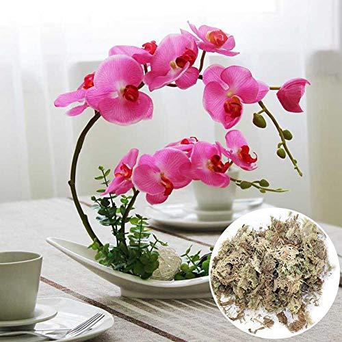 Chirsemey Musgo de Sphagnum para Bonsai 6L sustrato Musgo de turba Natural para Control de la Humedad en el terrario para Phalaenopsis Suministros orquídea jardín Regular