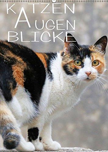 KATZEN AUGEN BLICKE (Wandkalender 2019 DIN A2 hoch): Einfach wunderbare Tiere, diese kleinen Tiger (Monatskalender, 14 Seiten ) (CALVENDO Tiere)