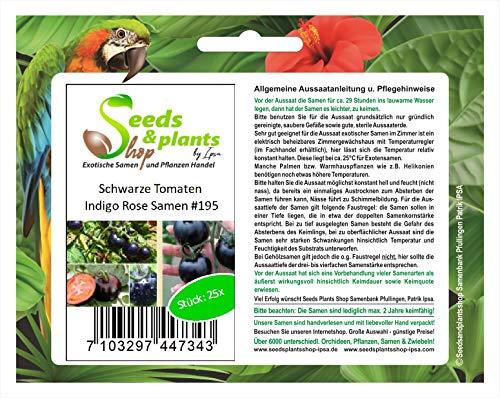 Stk - 25x Schwarze Tomaten Indigo Rose Gemüse Pflanzen - Samen #195 - Seeds Plants Shop Samenbank Pfullingen Patrik Ipsa