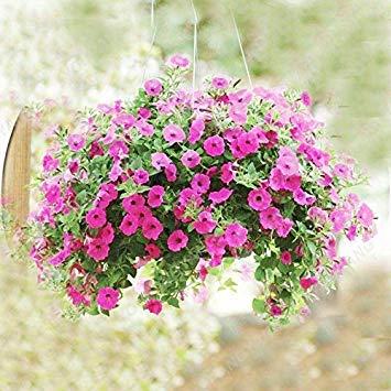 VISTARIC 4: Japon Bonsai Annona Corossol Graine Heirloom Annona Graine de plantes en pot Juicy Fruit Succulent Graine Rare Outdoor vivace Arbre 5 Pc 4