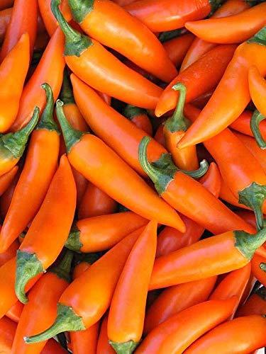 PLAT FIRM GERMINATIONSAMEN: 100 samen: USA Bulgarian Carrot Pepper 25-200 samen HEIRLOOM