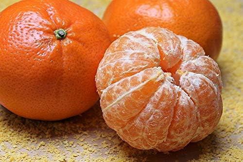 NP 5 ☆ very popular - 20 Tangerine Mandarin Sales for sale Orange Fruit LUC Tree Seeds Citrus