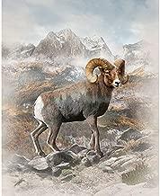 Big Horn Sheep - Natural - Call of The Wild Digital Print - 34