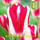 Aerlan Couleur Riche graines,Graines de Fleurs d'intérieur de bulbes de Tulipes-I_1,Jardin Graines