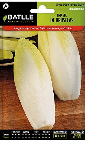 Batlle Gemüsesamen - Chicoree Sorte Brüssel (Samen)