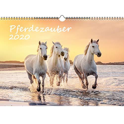 Paardenmagie DIN A3 kalender 2020 paarden en veulen - zeelmagie