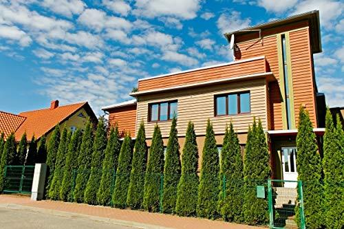 25x Thuja Smaragd Lebensbaum 15-30cm im Topf - Spar Set