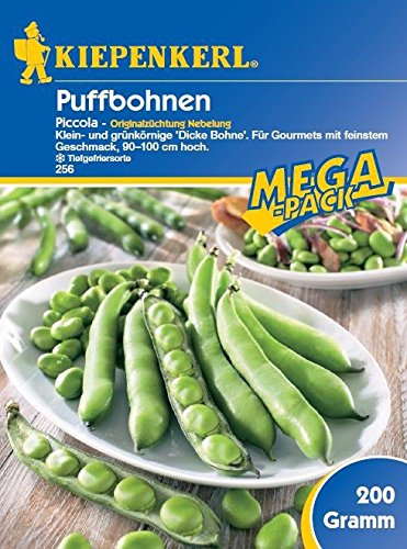 Bohnensamen - Puffbohne Piccola von Kiepenkerl