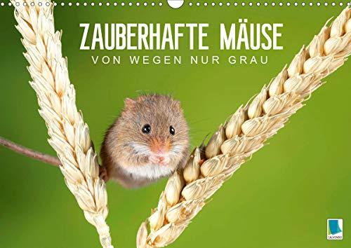 Zauberhafte Mäuse: Von wegen nur Grau (Wandkalender 2021 DIN A3 quer)