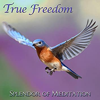 True Freedom - Guided Meditations for Relaxation and Stress Relief With Christine Wushke