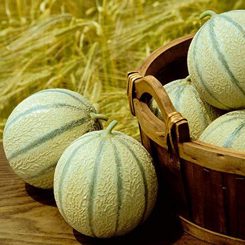 begorey Garten - Zuckermelone Samen Mini Melone Saatgut Bio Melonensamen Seltene Obstsamen Saftig Haus Bonsai Pflanze Seeds Mehrjährig Winterhart für Garten Balkon