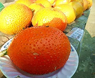 Tara-garden 10 SEEDS GAC FRUIT RARE MOMORDICA COCHINCHINENSIS EXOTIC HEALTH BENEFIT 2016