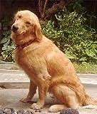 Caniderm-V, Nahrungsergänzung, für Hunde, bei Hautproblemen, Milben, Ekzemen, Allergien (Einzelpackung) - 5