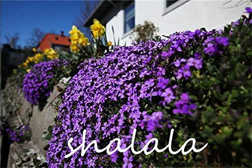 Ferry 200 Stück A Bag Lobelia Pflanze Bonsai Blume Flores, Bodendecker Chlorophytum Gartengestaltung leuchten Ihren Garten: 17