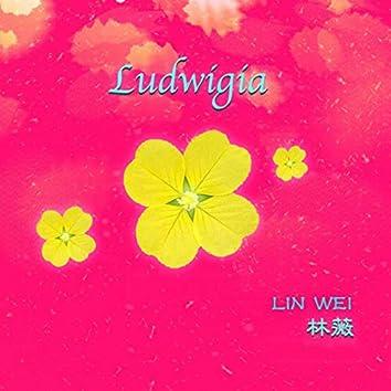 Ludwigia