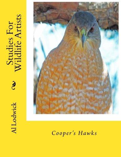 Cooper's Hawks: Studies For Wildlife Artists