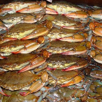 Frozen Domestic Soft Shell Blue Crabs the 100% USA Topics on TV Excellence of Product
