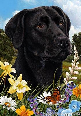 Best of Breed Labrador noir - pavillons de jardin de fleurs d'été