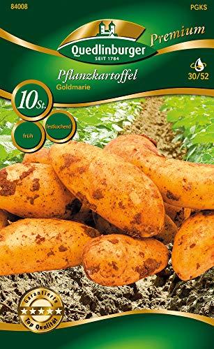 Quedlinburger 84008 Kartoffel Goldmarie (10 Stück) (Pflanzkartoffeln)