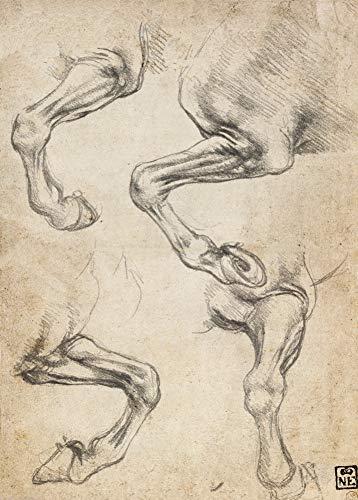Leonardo da Vinci 'Studies van been van het paard' Vintage Anatomie, 15e-16e eeuw, 250gsm 250gsm Laagglans Reproductie Poster