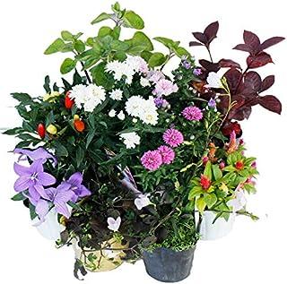 ハッピーガーデン 店長おまかせ8苗セット 用途に合わせて選べる2タイプ 鉢植え用