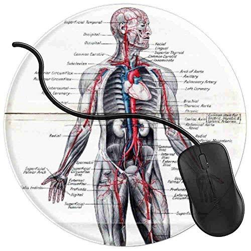 QCFW Alfombrilla de Ratón Cuadro de anatomía del Estudiante de enfermería médica Alfombrilla de Ratón Ordenador Gaming Superficie Suave 2T3740