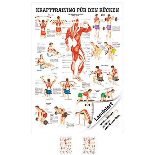 Ruediger Anatomie TA79LAM Krafttraining für den Rücken Tafel, 70 cm x 100 cm, laminiert