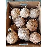 ココナッツ オールドココナッツ 20玉入り