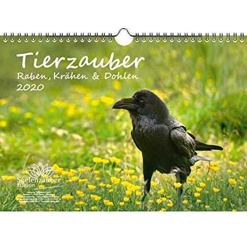 Tierzauber Raben, Krähen und Dohlen DIN A4 Kalender 2020 - Seelenzauber