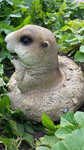 Erdmännchen Figur (E5) Gartenfigur Tierfigur NEU 6 Modelle zur Wahl Wetterfest Gartenzwerg Deko Polystone - 2