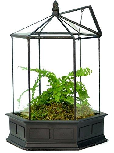 Beautifully enclosed glass terrarium