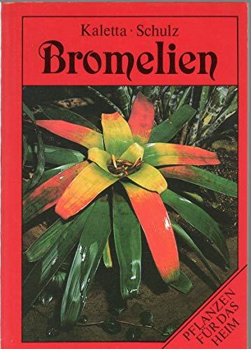 Bromelien. Pflanzen für das Heim