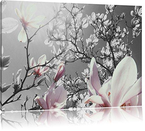 schöne Magnolie Blüten schwarz/weiß Format: 120x80 auf Leinwand, XXL riesige Bilder fertig gerahmt mit Keilrahmen, Kunstdruck auf Wandbild mit Rahmen, günstiger als Gemälde oder Ölbild, kein Poster oder Plakat