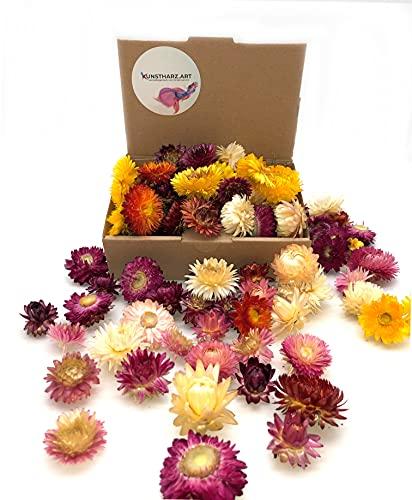 Kunstharz.Art Getrocknete Blumen als Landhaus Stil Deko Strauß und zum Kranz Basteln (Mix Strohblumen)