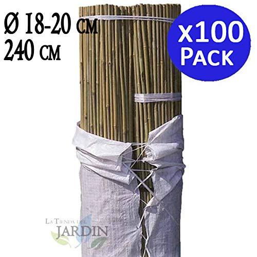 TUTOR DE BAMBU 240 cm, diámetro 18-22 mm. Uso agrícola para sujetar árboles, plantas y hortalizas. Pack ahorro de 100 Cañas de bambú