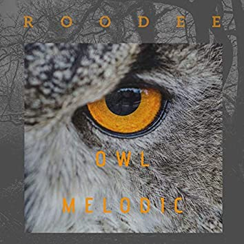 Owl Melodic
