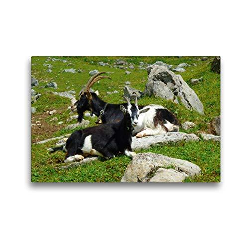 CALVENDO Premium Textil-Leinwand 45 cm x 30 cm Transversal, Cabras en los Alpes suizos, Imagen sobre Bastidor, Fertigbild en verdadera Lienzo, Leinwanddruck: Montañas Animales Animales