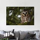 N / A Pintura sin Marco Decoración del hogar Lienzo Animal búho Bosque Luna Llena Cartel Pintura al óleo Mural Sala de Estar decoración Pintura ZGQ5940 40X60cm