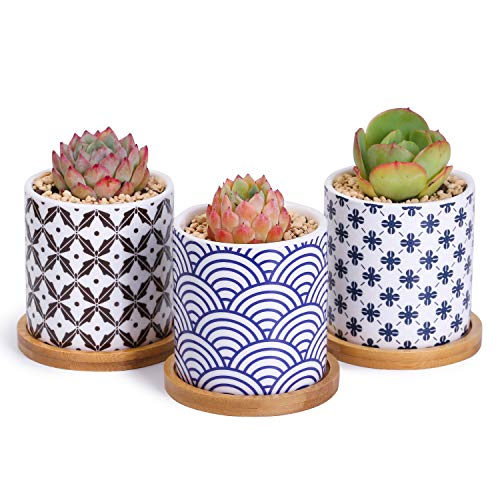 Greenaholics Succulent Pots - 3 Inch Pattern Japanese Style Cylinder Ceramic Planters for Small Succulent, with Bamboo Saucers, Set of 3