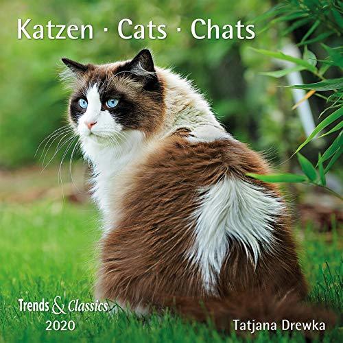 Katzen Cats 2020 - Broschüren-Wandkal inkl Poster