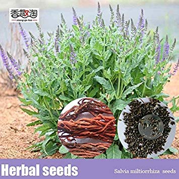Potseed 100pcs Salvia miltiorrhiza BGE Semillas, Semillas de Flores danshen