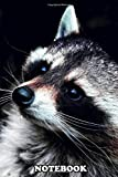 Notebook: Poster Of A Raccoon With A Subtle Red Sheen Over His He , Journal for Writing, College Ruled Size 6' x 9', 110 Pages