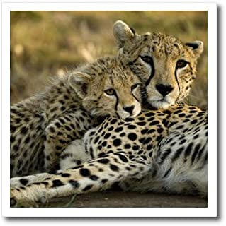 3dRose ht_71059_3 Cheetah with Cub in The Masai Mara Gr, Kenya, Joe and Mary Ann Mcdonald-Iron on Heat Transfer Paper for White Material, 10 by 10-Inch