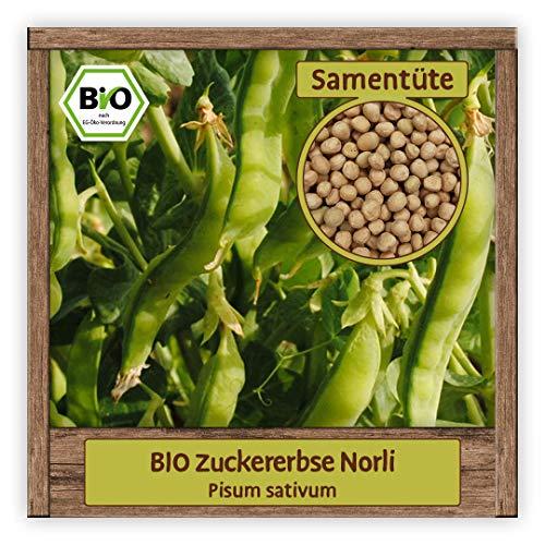 BIO Zuckererbsen Samen Sorte Norli Gemüsesamen Zuckerschote Erbse mit süßen essbaren Hülsen