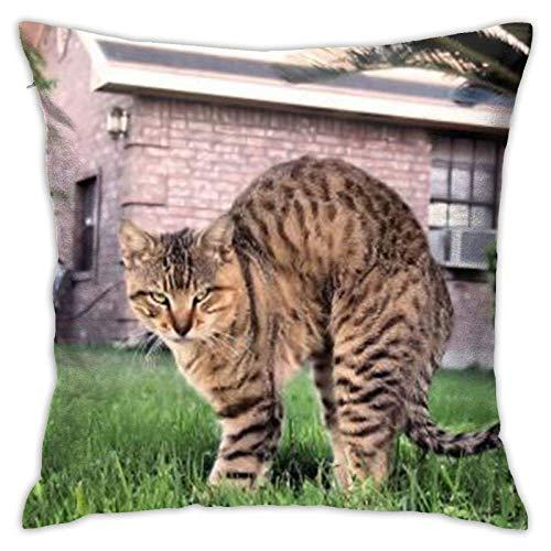 Xiangyang Cojines,Cushion sofaFunda de Almohada Cuadrada Cat (2), Funda de Almohada Decorativa Moderna, Adecuada para Decorar sofá, 45X45cm