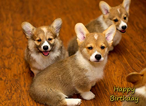Corgi Dog Birthday C